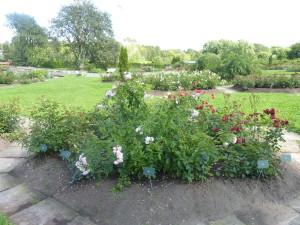 Barevné záhony vBotanické zahradě vTallinu upoutají naprvní pohled.