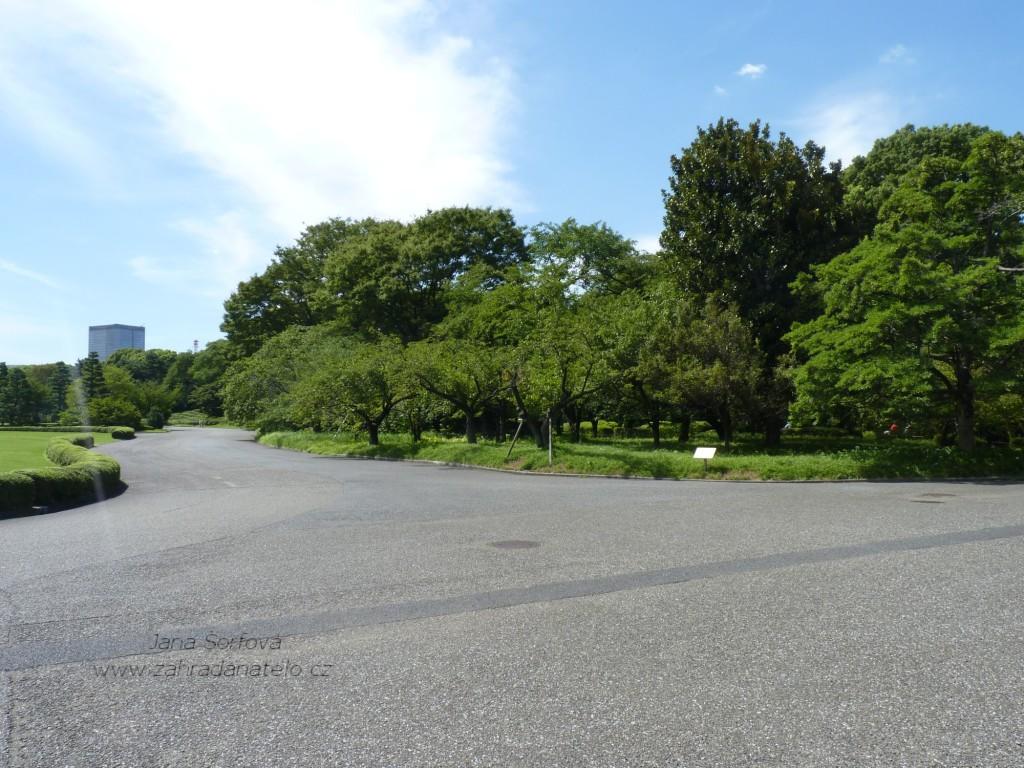 167 Tokio - c°s pal